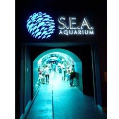 Travel Sea Aquarium Singapore Child