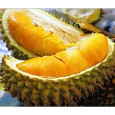 Bibit Tanaman Durian Musang King