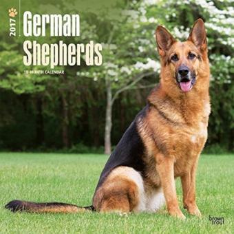 German Shepherds 2017 Wall Calendar