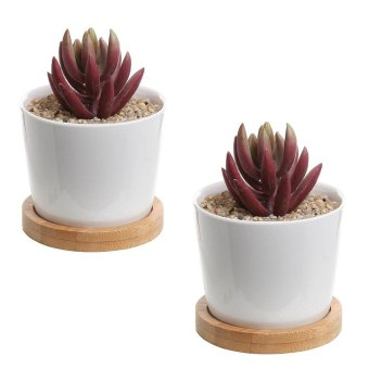 Set of 2 Modern White Ceramic Succulent Planter Pots / Mini Flower Plant Containers with Bamboo Saucers - intl