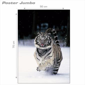 Harga Poster Jumbo: Harimau Putih #MSC5 - 50 x 70 cm