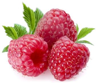 Harga biji benih buah arbei merah import berisi 10 butir