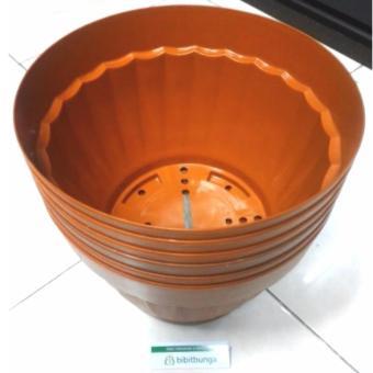 Bibit Bunga Pot Bunga Vanda 3000 Merah Bata