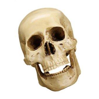 BolehDeals Gothic Carving Model Skull Figurine Human Head Medical Model Decor - intl