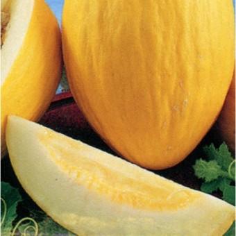 Victory Seed Biji Benih Golden King Melon Fruit Berisi 15 Butir