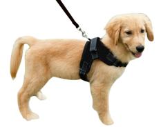 Tali anjing peliharaan rompi pengaman yang ditetapkan, disesuaikan nilon tali tuntun anjing kerah untuk pelatihan