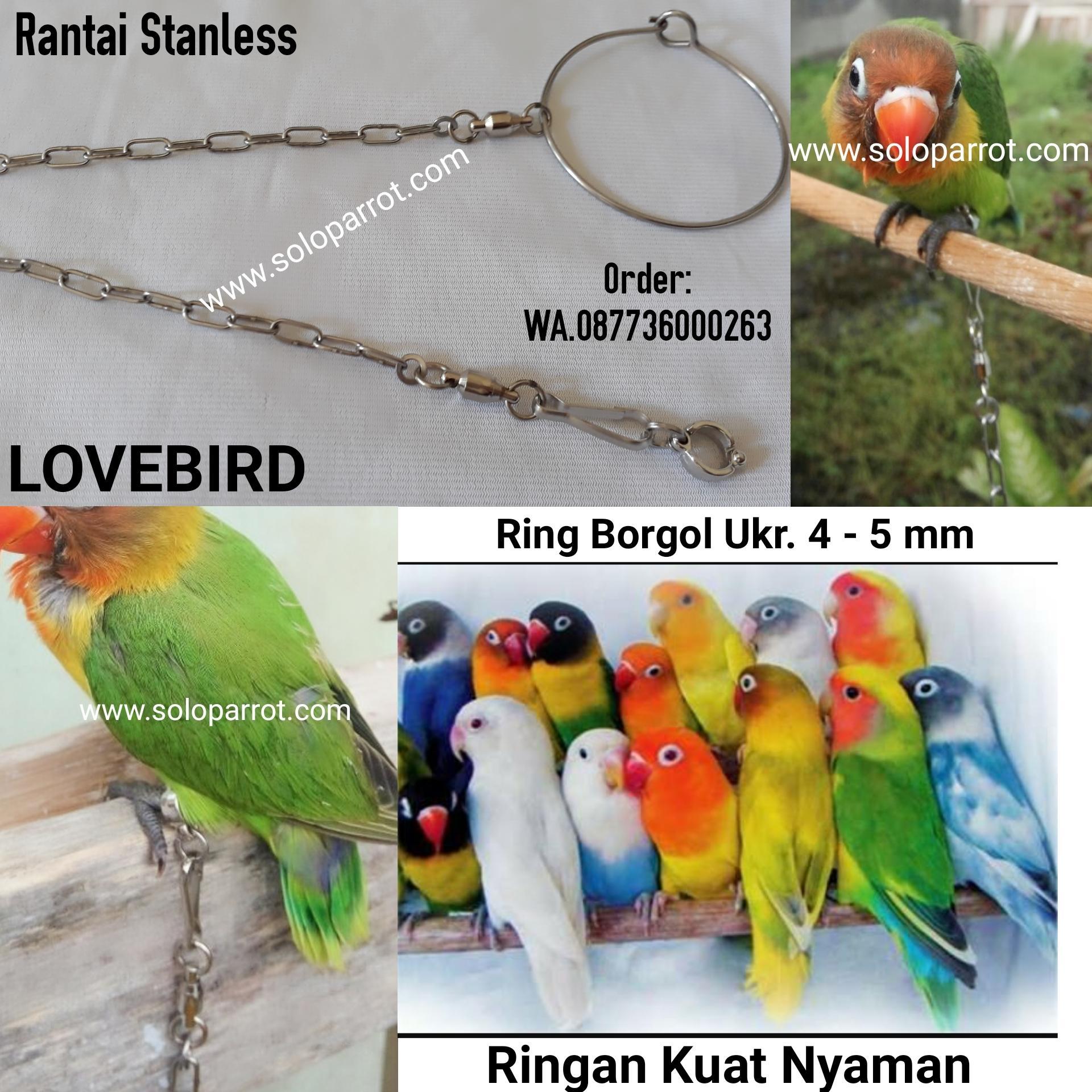 Buy Sell Cheapest Rantai Burung Lovebird Best Quality Product Gantungan Karet Oriq Jaya Anti Slip Sangkar Kandang Murai Kacer Anis Kenari Pleci Cucak Dll Buat