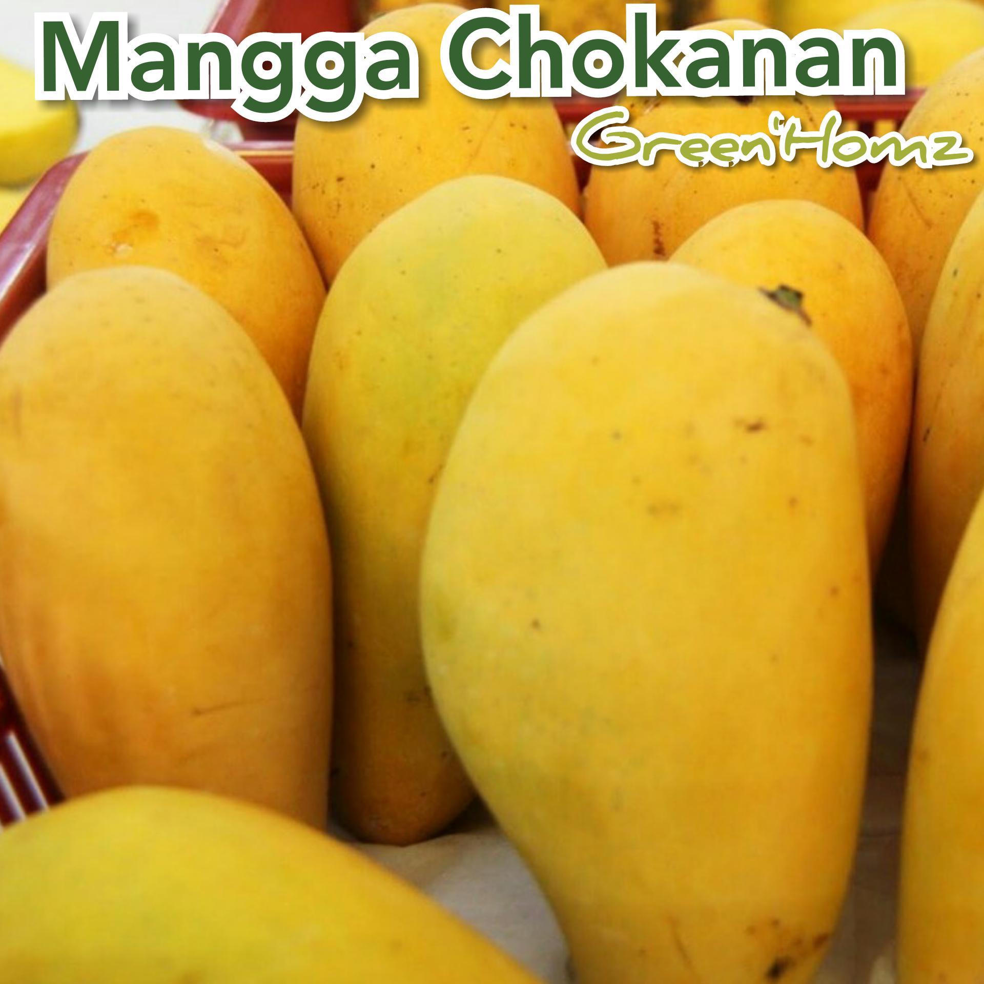 bibit mangga cokanan/chouk an nan/THAILAND