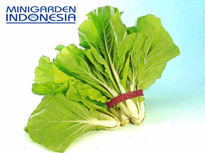 100 Benih Sawi HIJAU San Feng F1 bibit tanaman sayur sayuran hidroponik