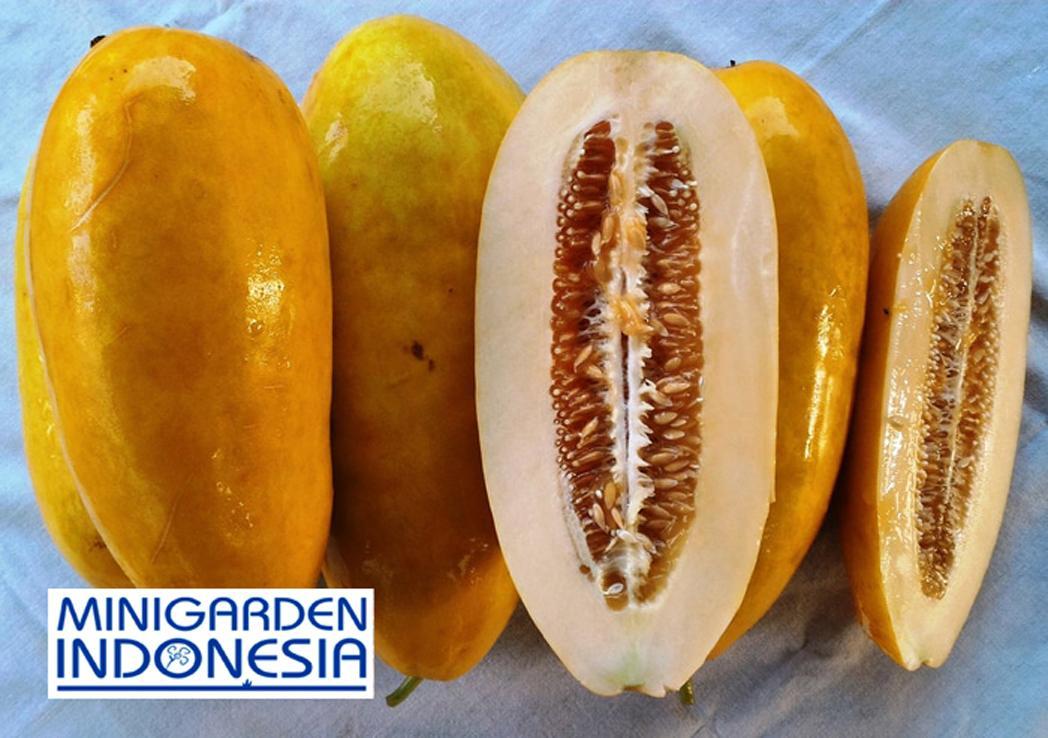 10 Benih Timun Suri IPB TS1 F1 bibit tanaman sayur sayuran mentimun