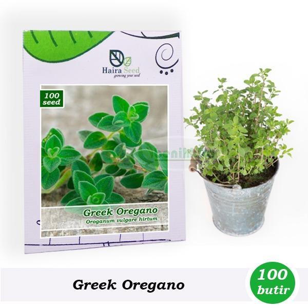Benih-Bibit Herba Greek Oregano (Haira Seed)