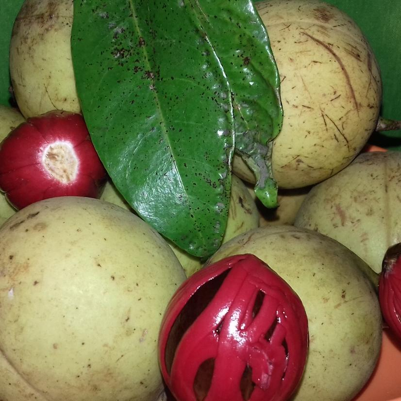 Buy Sell Cheapest Harga Promo Buah Best Quality Product Deals