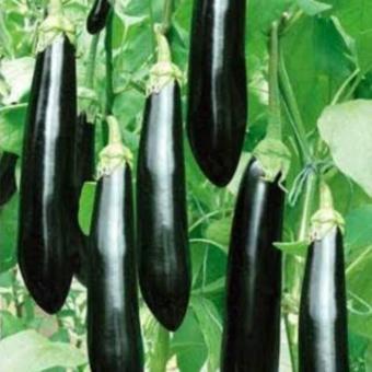 Bandingkan Toko Biji Sayuran .