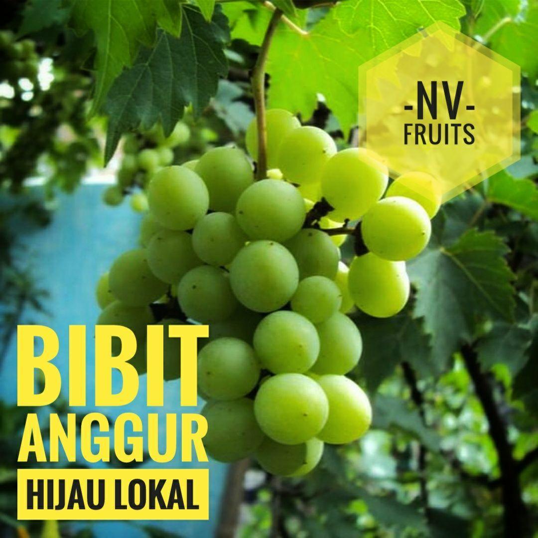 Bibit Buah Anggur Hijau Lokal