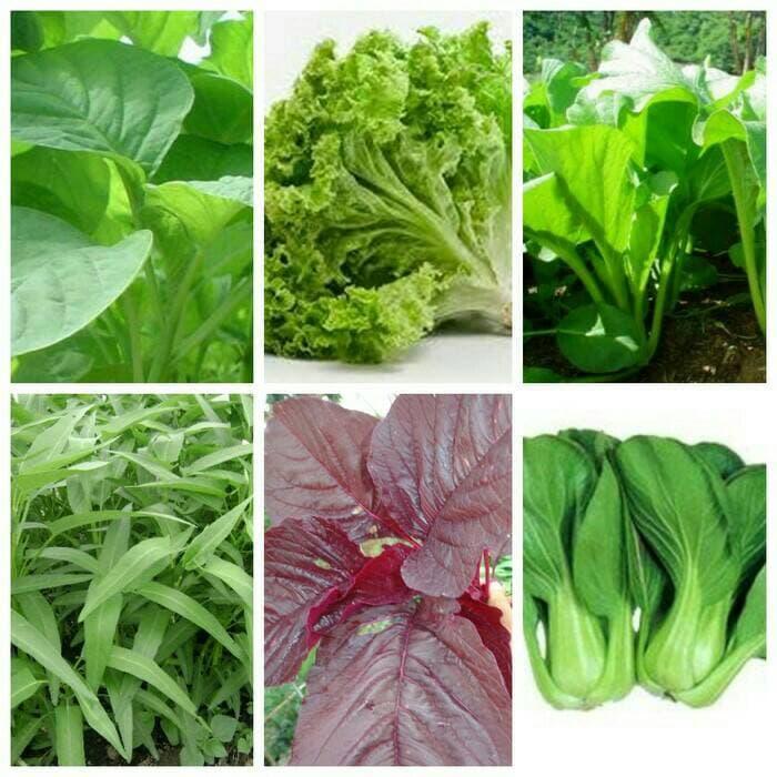 Benihbibit Sayuran Selada Kayla Red 100 Biji Daftar Harga Source · bibit sayuran