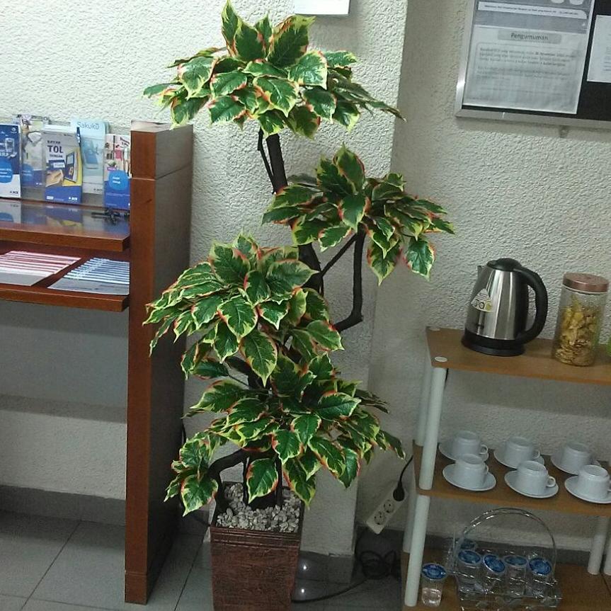 Pohon tinggi 160