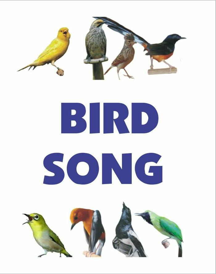 Bird Song (Speaker MP3 masteran isian burung kicau)
