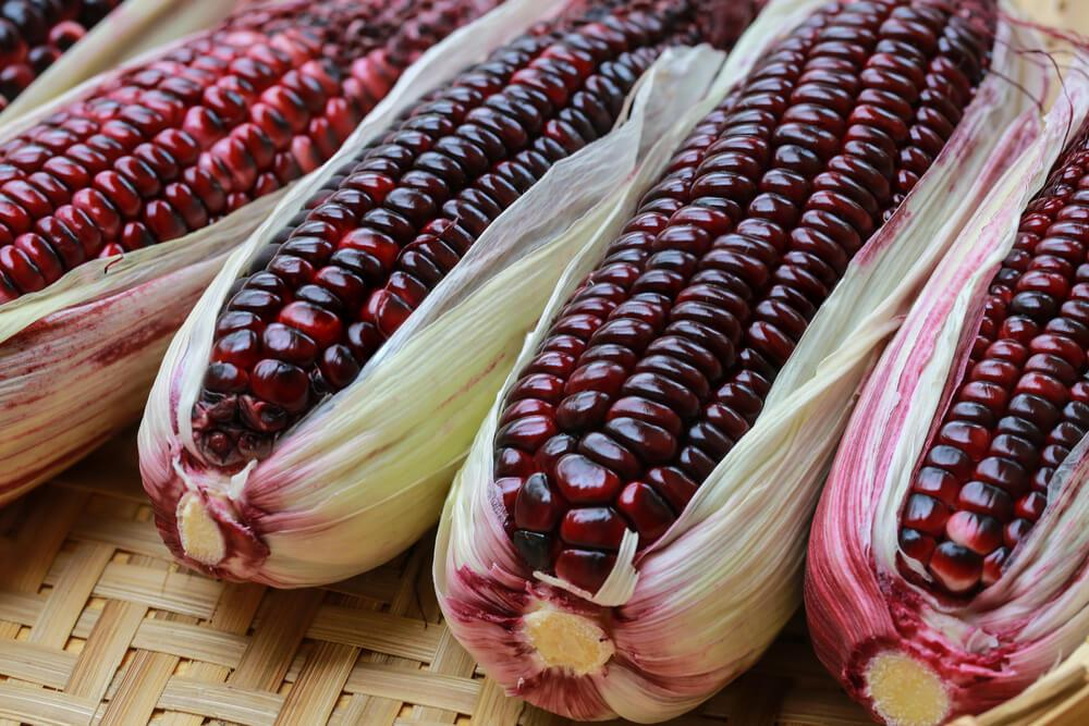 Bibit / Benih / Seeds Sayur Jagung Unik Purple Corn