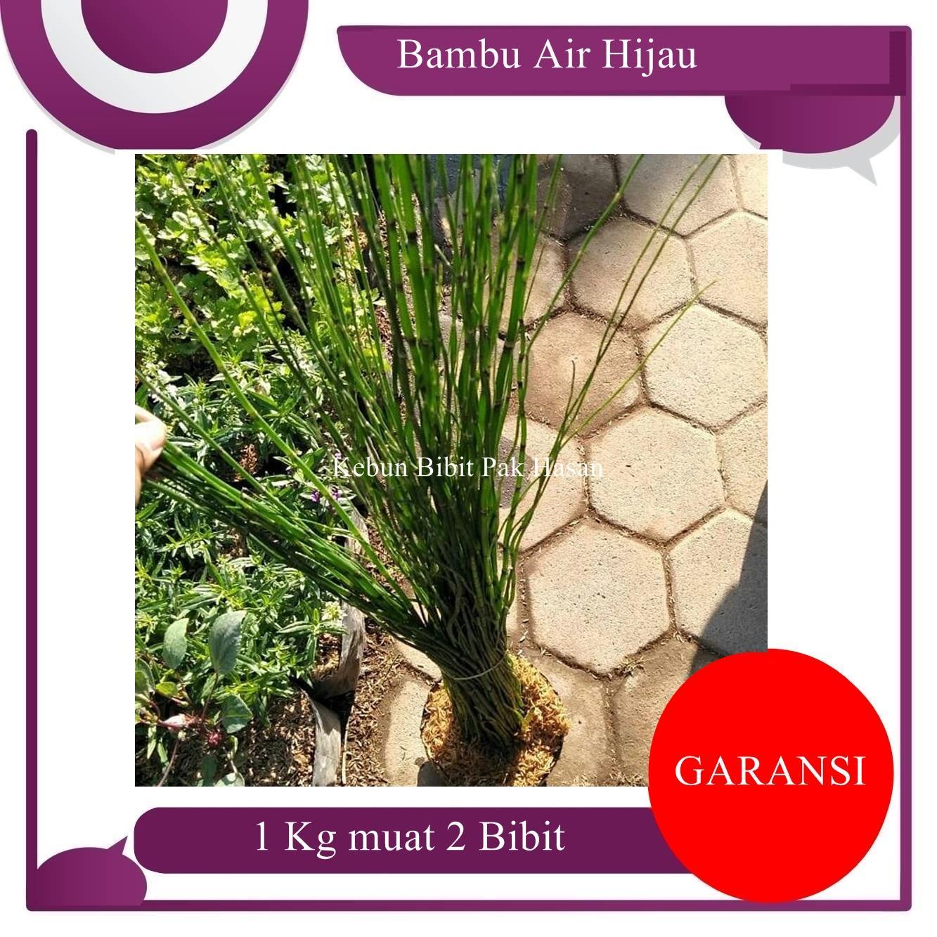 Sunwonder Baru Bagus Menggemaskan Bunga Harum Wangi Benih Bonsai Tanaman  Lidah Buaya Biji-Intl. 936f447b1b