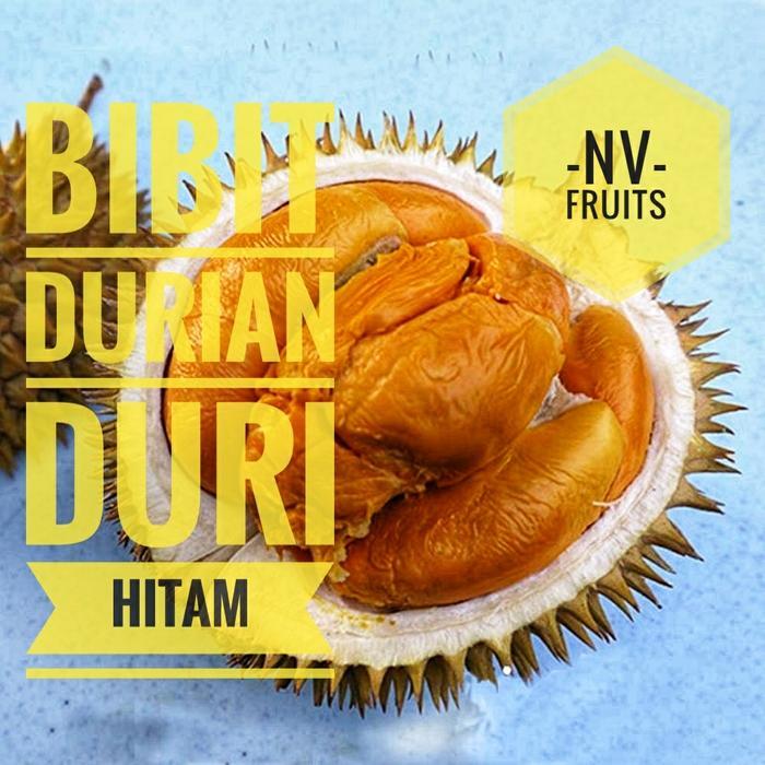 Bibit Buah Durian Duri Hitam