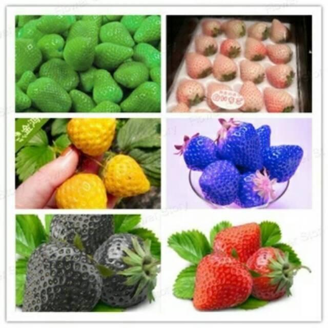 Benih Buah Strawberry Multi Colours Mixed