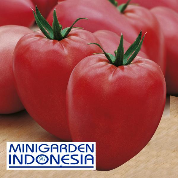 4 Benih TOMAT Cuor di bue F1 Mr Fothergills bibit tanaman buah / sayur sayuran