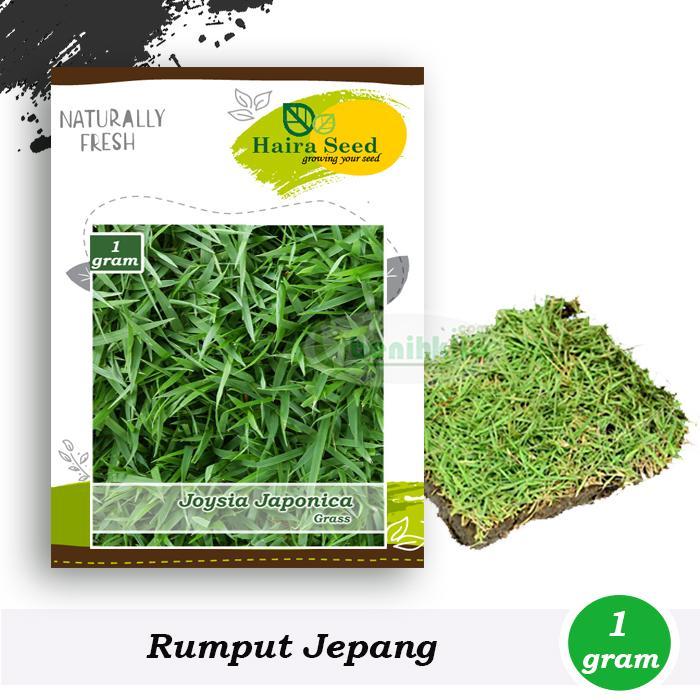 Benih-Bibit Rumput Jepang (Haira Seed)
