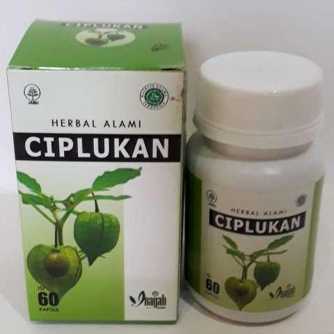Kapsul Daun Ciplukan/Daun Ciplukan Obat Herbal