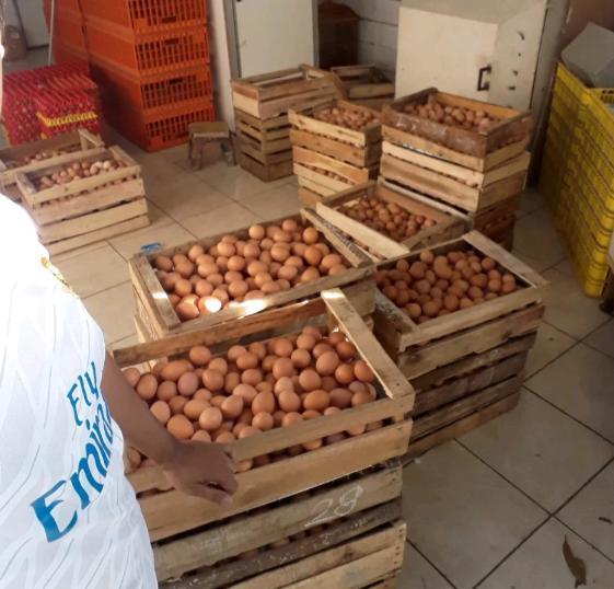 Jual Telur Ayam Lokal By Agen Telur Ayam Syimar.