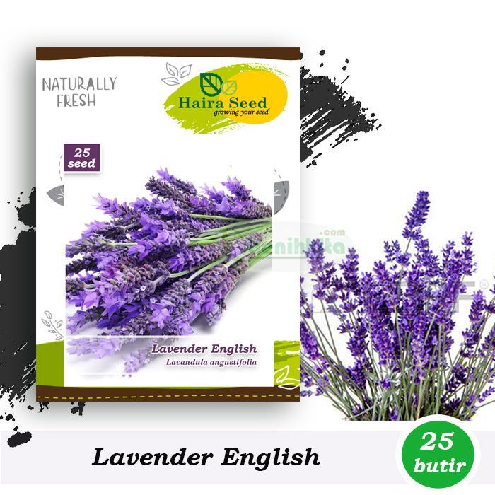 Benih-Bibit Bunga Lavender English (haira Seed) By Benihkita-Com.
