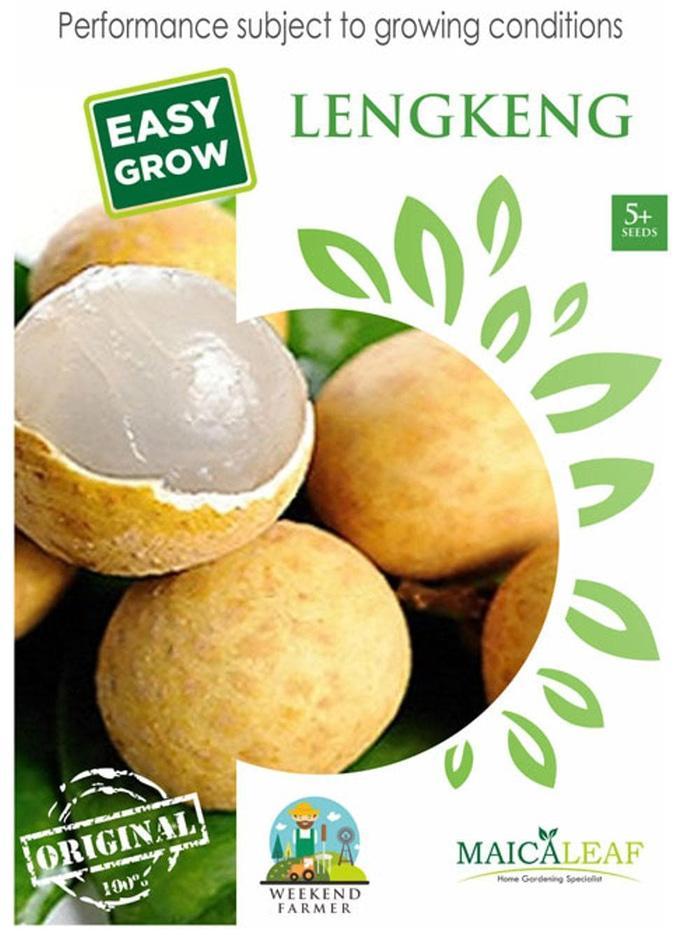 Lengkeng Kristal Maica Leaf Easy Grow 5 Seeds By Star Farm.