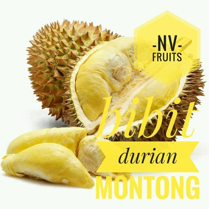 Bibit Buah Durian Montong 3 Kaki