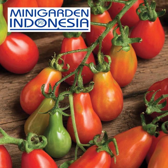 5 Benih Tomat Red Pear F1 Mr Fothergills Bibit Tanaman Sayur Sayuran