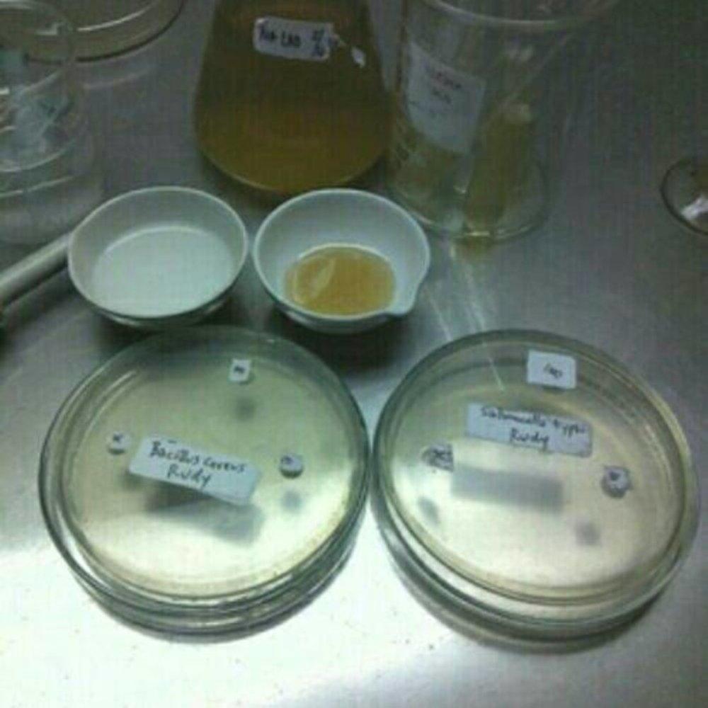STOK TERBARU Jual biakan bakteri dan jamur ATCC penelitian