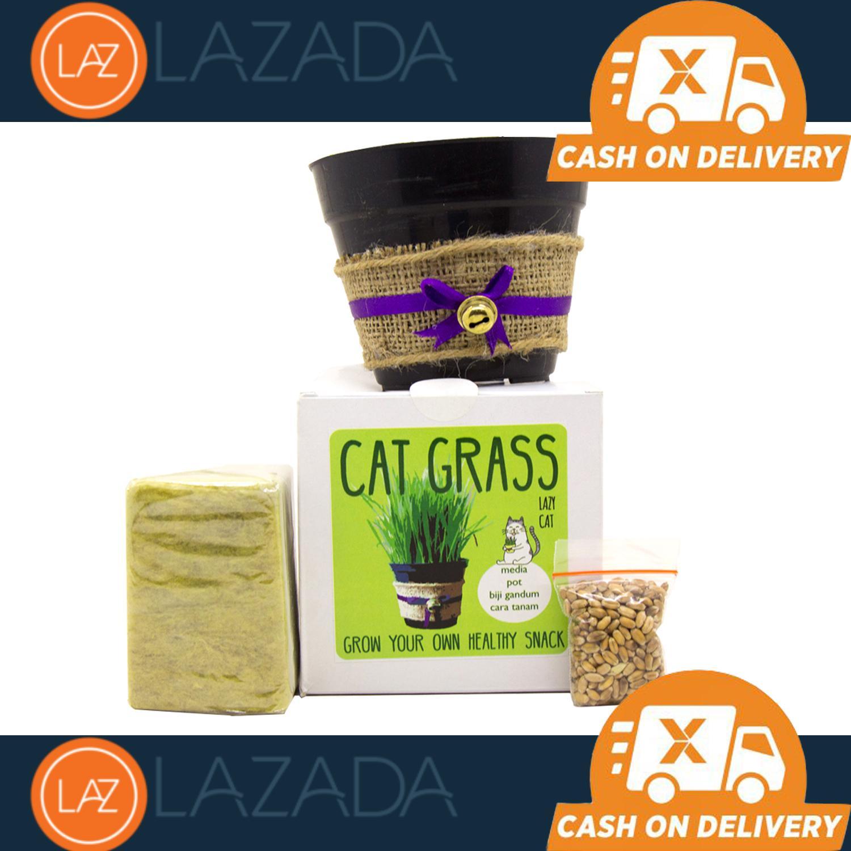 StarStore Cat Grass Seeds / Bibit Rumput makanan Kucing