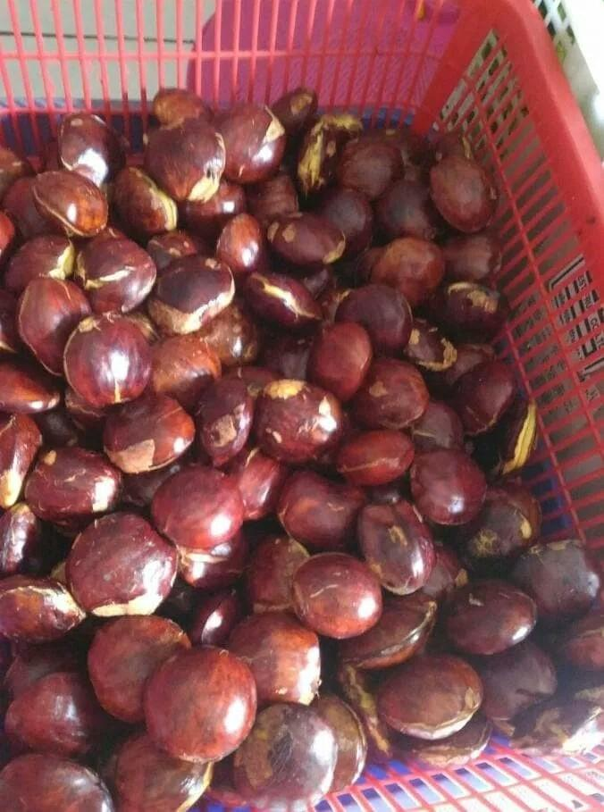 Jengkol Tua Kupas 500 Gram By Arie Collection.