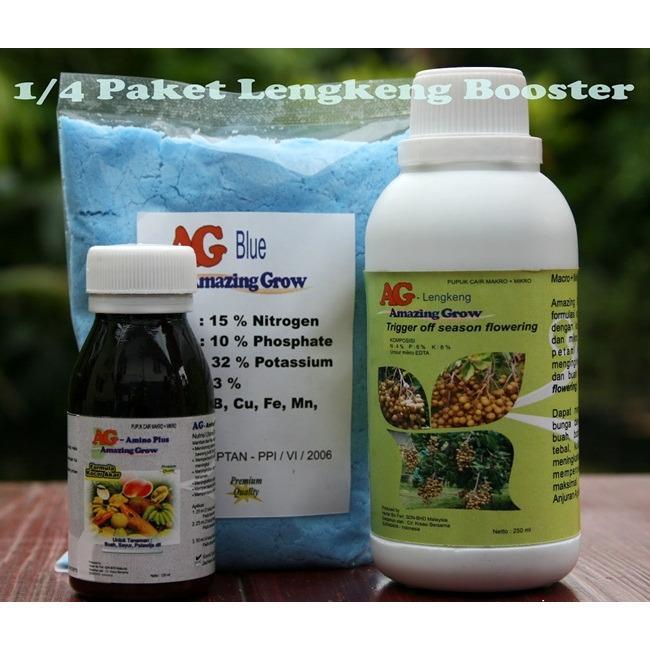 Bibit Bunga Lengkeng Booster AG Paket 1/4 – Kelengkeng 3-5 Tahun