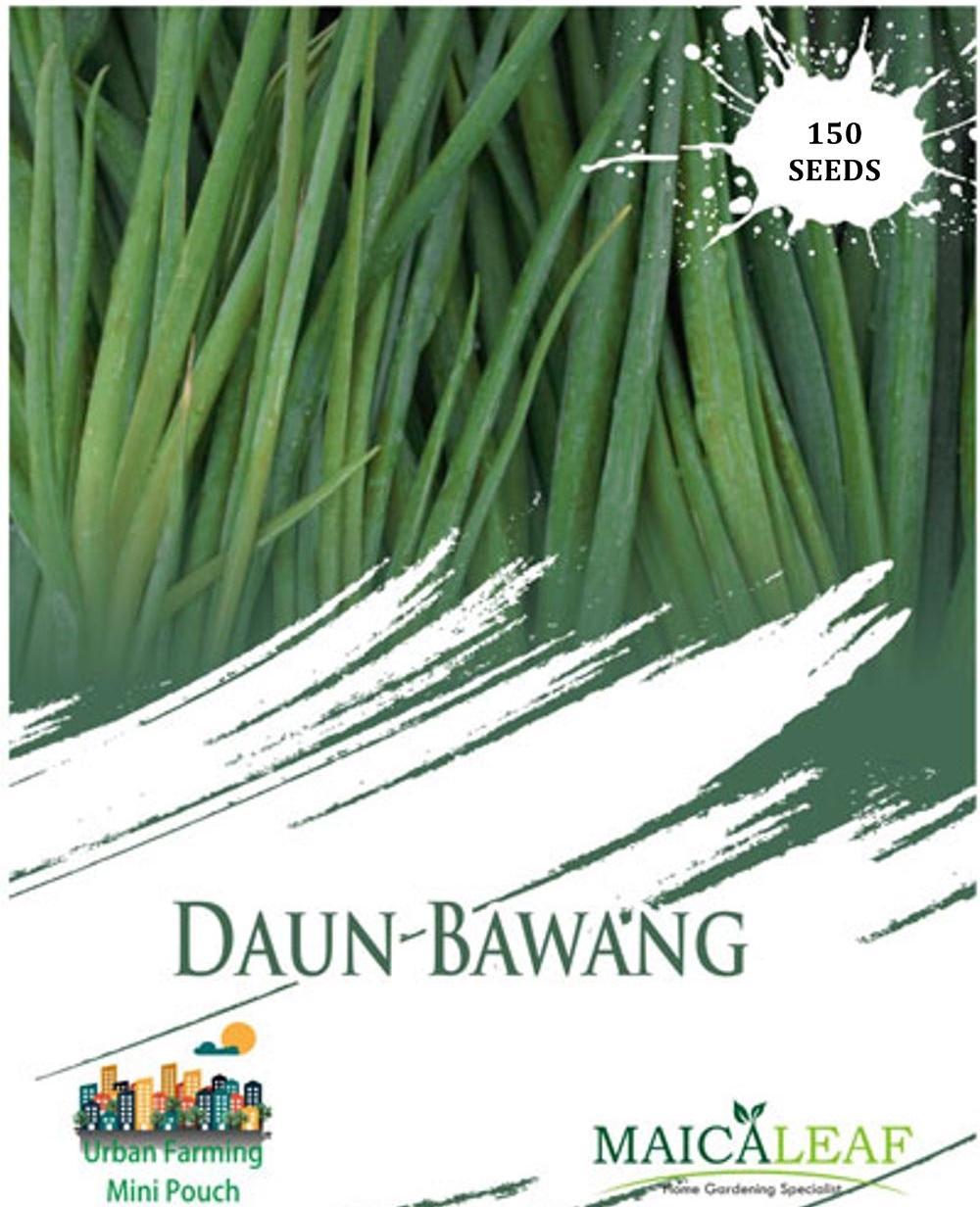 Maica Leaf Benih/Bibit Tanaman Daun Bawang - 150 Butir