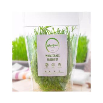 Harga Wheatgrass Fresh Cut