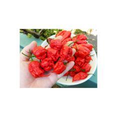 Amefurashi Bibit / Benih / Seeds Cabe Carolina Reaper Hot Pepper Cabe Super Pedas