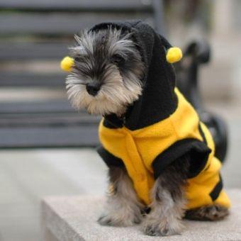 Anak anjing kucing Pet Bee Baju Kostum jaket mantel burung gagak kelabu pakaian 5 ukuran 14 - 5