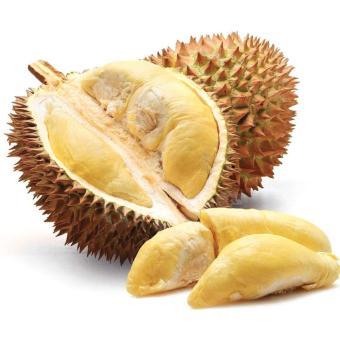 BIbit Buah Durian D24 - 2