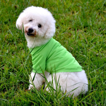 Cute PET pet dog Cat CAT T-Shirt Puppy Casual Suit Cotton ClothesXS/S/M/L Colorful-L