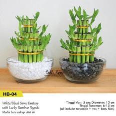 Vas Tanaman Bambu Rejeki Hoki + Batu Hias (HB-04)