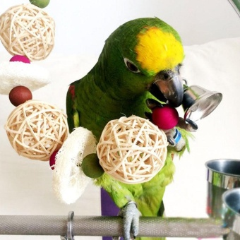 Bell Swing Cage Bird flexible colorful bridge parrot bird swing petStand toy - intl