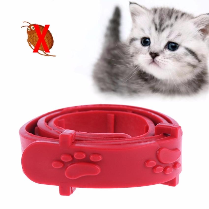 HARNESS H LEASH kucing musang kelinci puppy small breed BL03. Source · kalung kutu tungau caplak kucing anak anjing flea and tick collar
