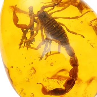 ... Serangga inklusi kalajengking batu Amber Baltik liontin kalung 6,1 cm x 4,32